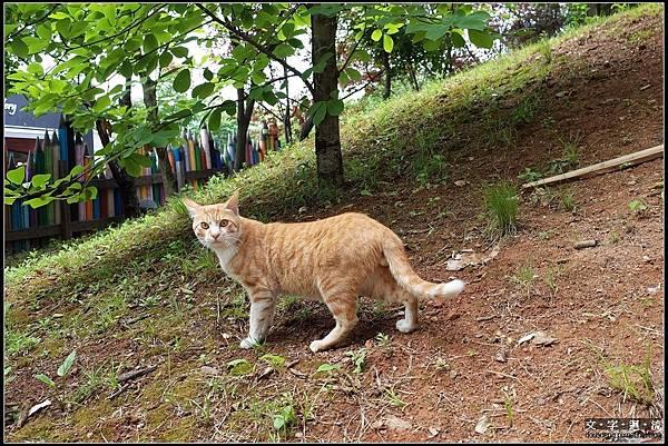 巧遇小橘貓