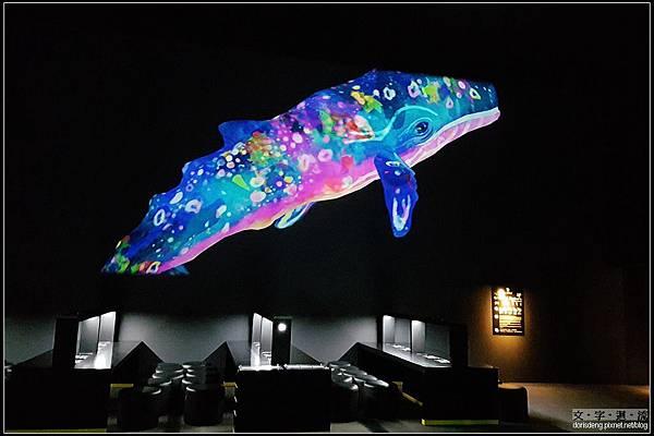 美麗的鯨魚