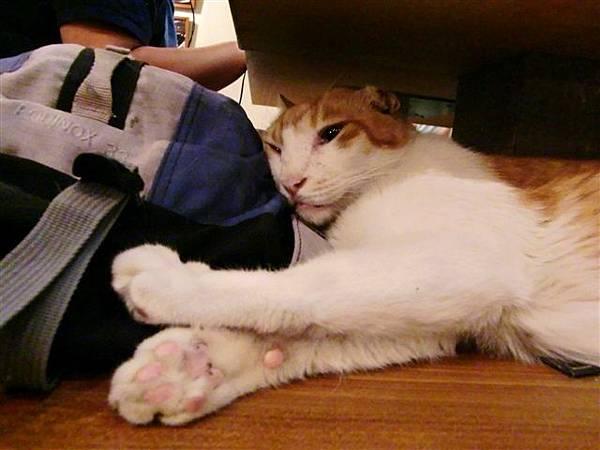 靠在人家包上睡覺好舒服