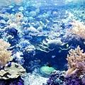 海底世界很多美麗的魚