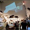 滿室動物標本