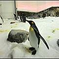 Melbourne Aquarium的開場動物~企鵝~