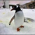 企鵝好可愛喔^^