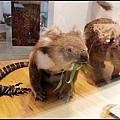 無尾熊標本