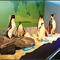 看小企鵝的過程中不能拍照攝影~