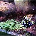 箭蛙~看起來像假的XD