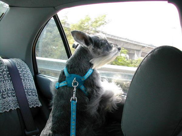 我最喜歡出門兜風,就算只是這樣坐著車吹風