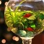 杯中魚1.jpg