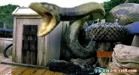 蛇大仙2.jpg