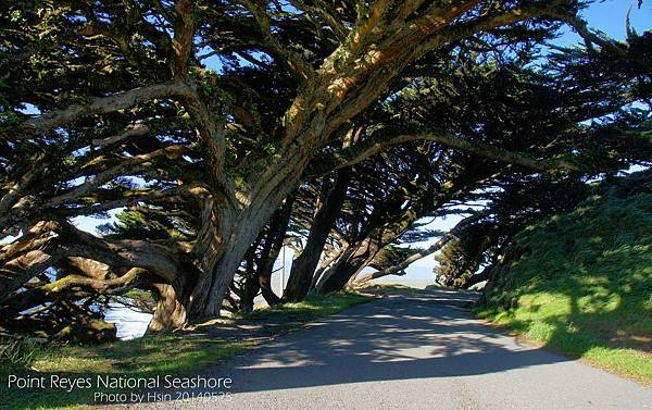 Point Reyes National Seashore雷斯岬