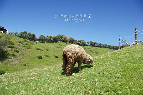 清境農場青青草原/清境农场