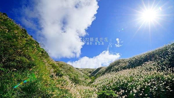 茶壺山芒花