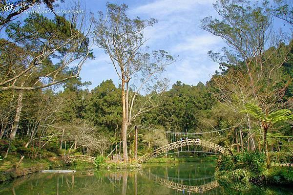 溪頭森林遊樂區
