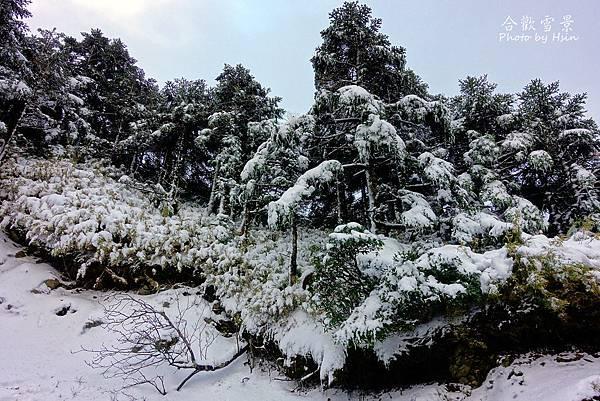 合歡山賞雪12