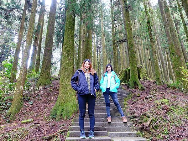 人工林步道