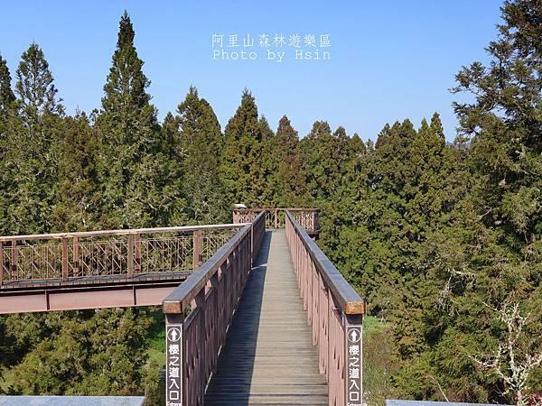 櫻花天空步道