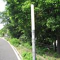 44.臨港線鐵道旁的路燈.JPG