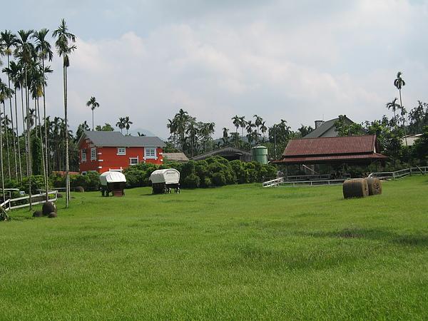 綠油油的草原.JPG