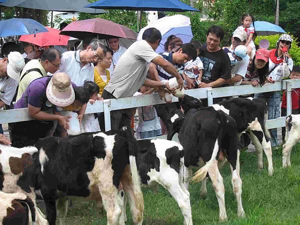 餵牛奶大賽(大家卯足勁灌牛喝奶)-s.jpg