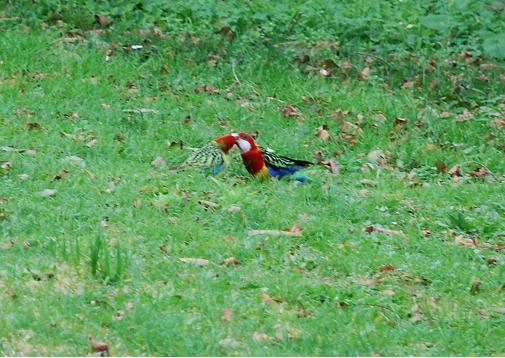 birds022.JPG