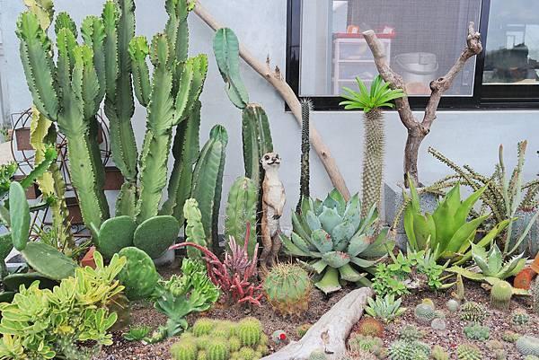荳荳多肉植物與小雜22 (13).JPG