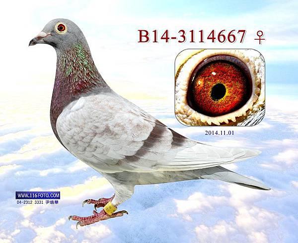 2014112821150556pic