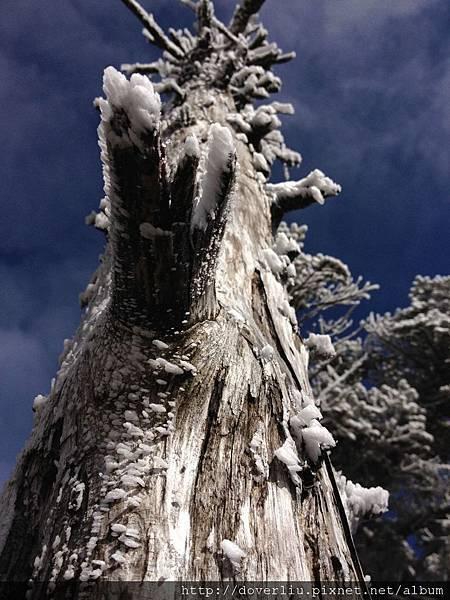 結霜的樹.jpg