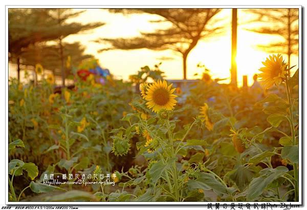 DSC01100_副本.jpg