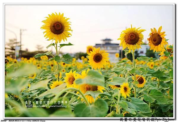 DSC01104_副本.jpg