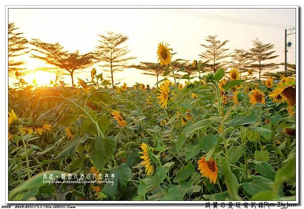 DSC01105_副本.jpg