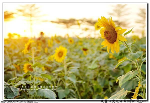 DSC01108_副本.jpg