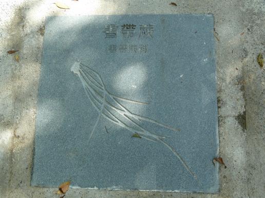 P1050524.JPG