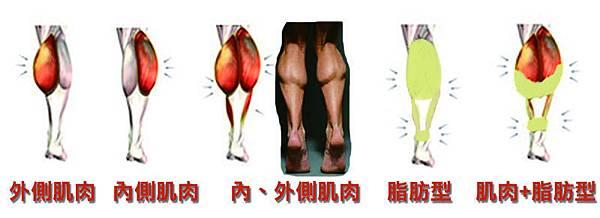 脂肪肌肉型圖.jpg