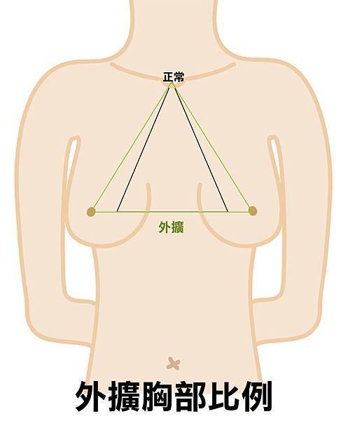外擴胸部比例.jpg