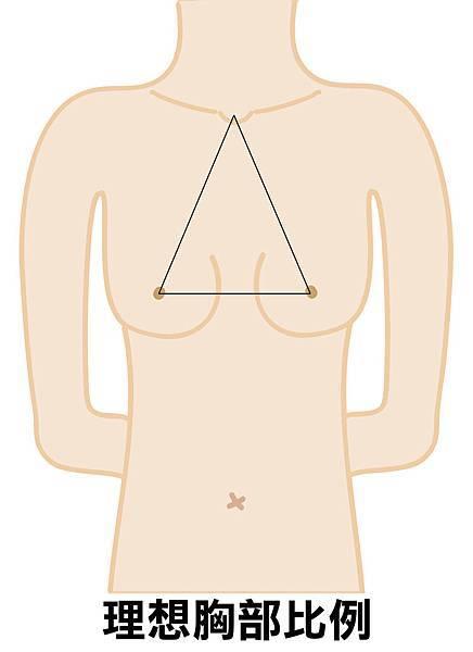 理想胸部線圖.jpg