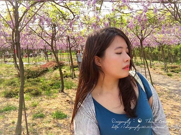 20170410天元宮櫻花、紫藤園雙享受_170412_0117_副本.jpg