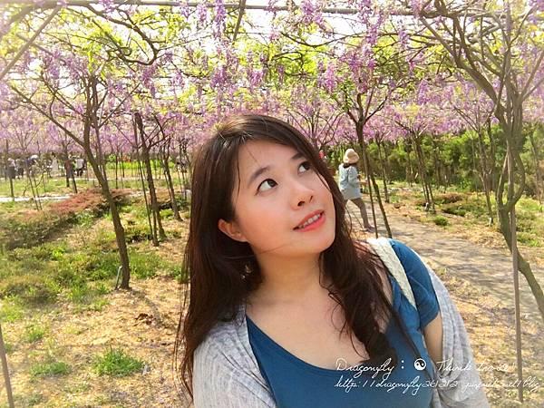20170410天元宮櫻花、紫藤園雙享受_170412_0119_副本.jpg