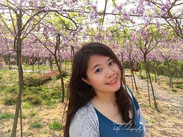 20170410天元宮櫻花、紫藤園雙享受_170412_0123_副本.jpg