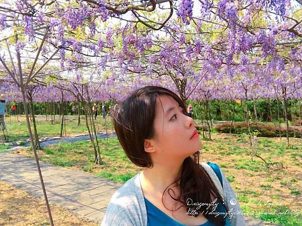 20170410天元宮櫻花、紫藤園雙享受_170412_0131_副本.jpg