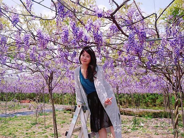 20170410天元宮櫻花、紫藤園雙享受_170412_0138.jpg