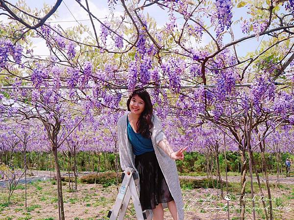 20170410天元宮櫻花、紫藤園雙享受_170412_0137.jpg