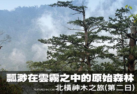 瓢渺在雲霧之中的原始森林-北橫神木之旅(第二日)