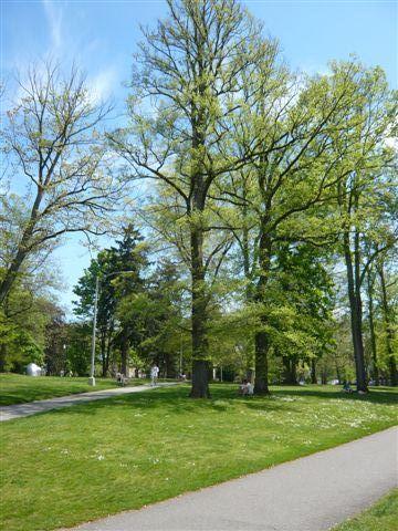 華盛頓大學校園一景