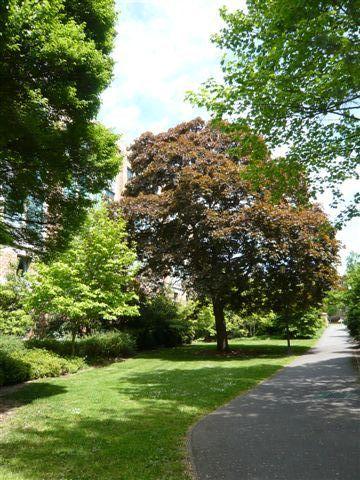 校園一景 - 這是某條小路的景像