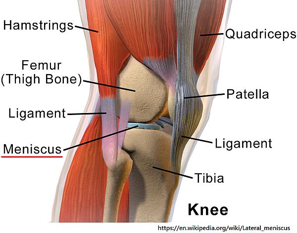 膝蓋半月板