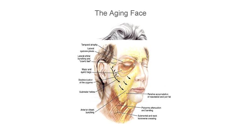 老化的肌膚
