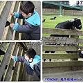 cats1-19.jpg