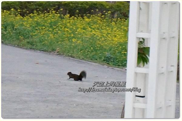 cats1-21.jpg