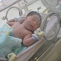 出生當天-還在保溫箱裡.睡的很甜