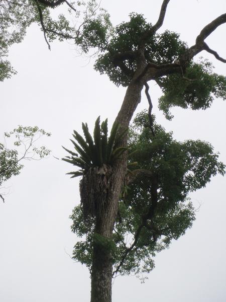 這不知道是什麼樹.....不過那顆好像鳳梨的形狀喔